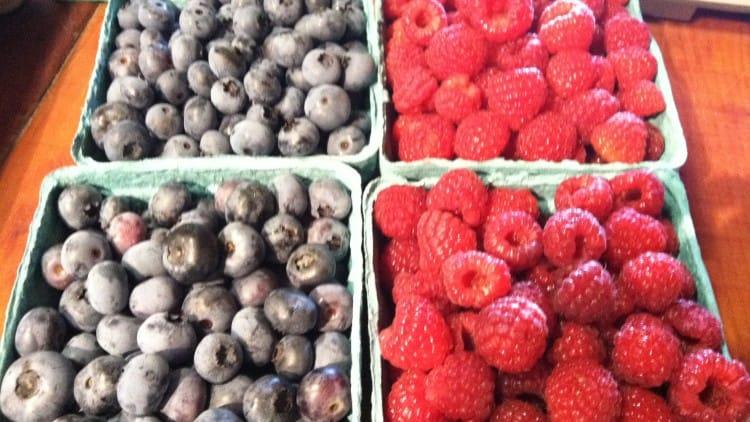 Berry Picking Down on Tangerini's Spring Street Farm