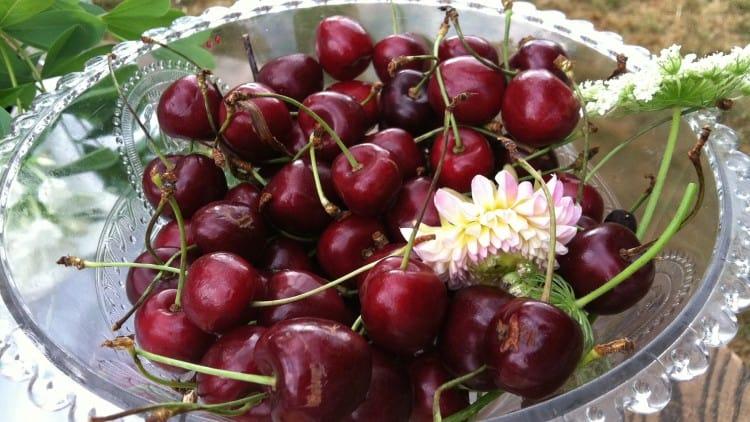 An Orchard Wedding