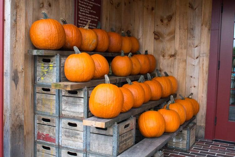 Farm Tour at Honstra Farms | The Foodie Dietitian @karalydon