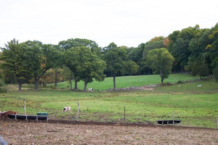 Dairy Farm Tour | The Foodie Dietitian @karalydon