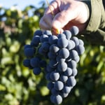 Welch's Vineyard Tour & Cooking with Concord Grape Juice