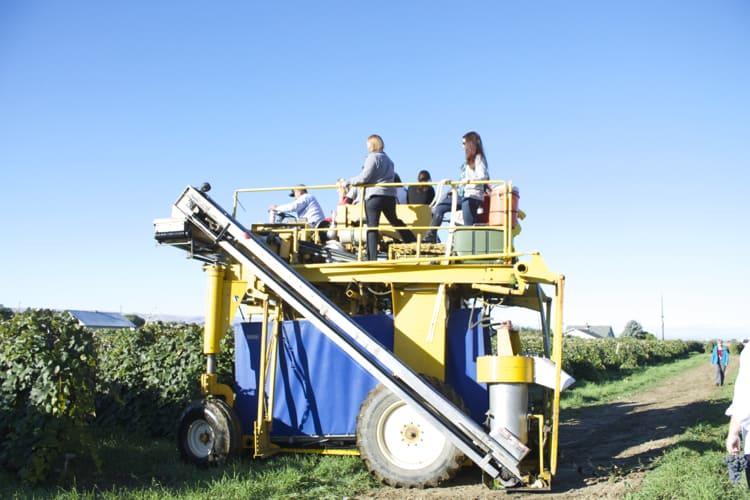 Welch's Vineyard Tour | The Foodie Dietitian @karalydon