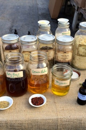 Mindful Monday: Herbs for Winter Wellness and Immunity