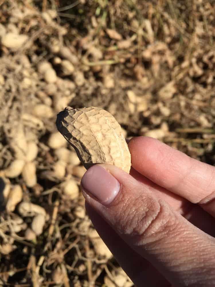 Peanut Farm Tour - 1 (2)