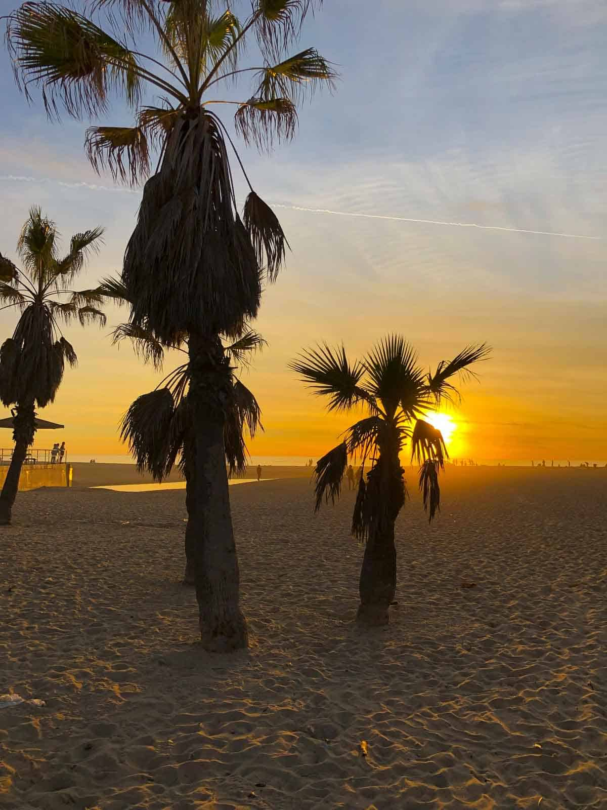 palm trees in front of the sunset on the beach