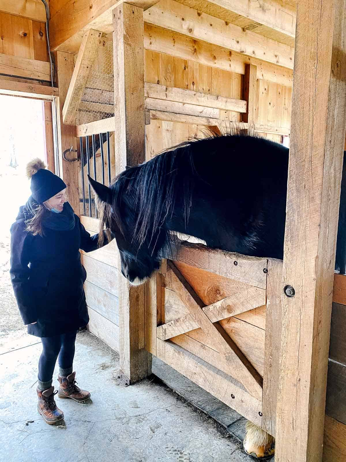 woman with winter coat and hat on petting black and white shire horse inside barn